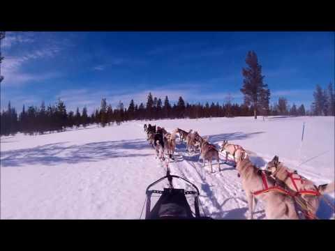 Gold Rush Run - Sled Dog Race 2016 (HD)