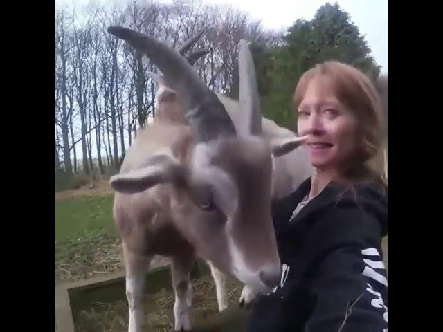 In der normalen Welt schiesst man nicht auf Tiere
