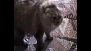Strange Cat [Strange Cats]