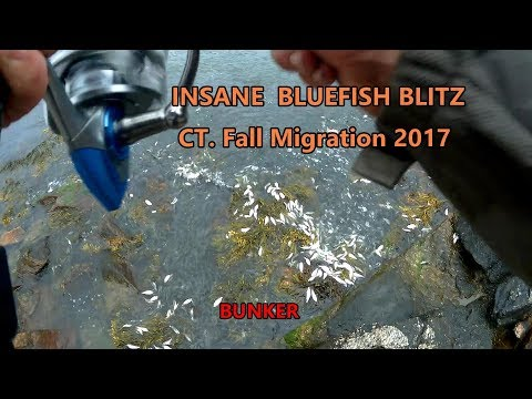 Bluefish Blitz Insane Footage CT Fall Migration 2017