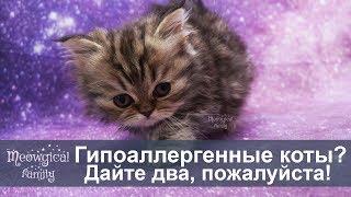 Существуют ли гипоаллергенные коты?