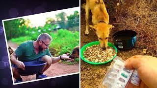 Мужчина ежедневно кормит 80 бездомных собак видео про собак