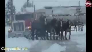 прикольное видео с животными  2012