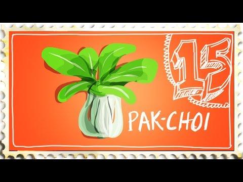 How to Grow Pak Choi - Suburban Homestead EP15