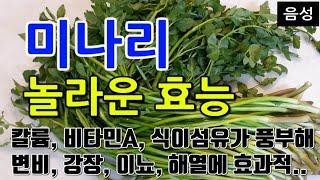 [#미나리효과] 미나리의 놀라운 효능 10가지 (칼륨,…