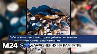 """""""Москва и мир"""": новая школа и вторая волна - Москва 24"""