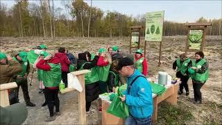За день на території декількох лісництв Коростещини висадили майже 100 тисяч сіянців дерев