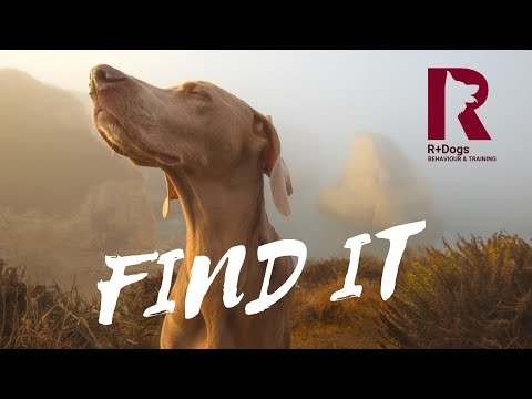"""How to play """"Find It"""" on a WALL with your dog!"""