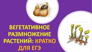 6. Вегетативное размножение растений: кратко для ЕГЭ