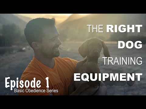 The Right Dog Training Equipment - Episode 1