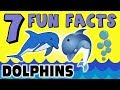 7 FUN FACTS ABOUT DOLPHINS! FACTS FOR KIDS! Ocean Learning! Learning Colors! Fun! Teach! Sock Puppet