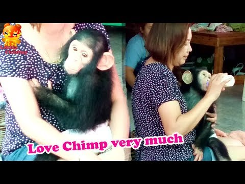 To Watch!!!!! Love Chimpanzee Very Much And Eat Bottle Milk