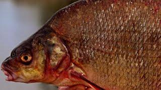 ОСЕННИЙ ДЕНЬ ДАРИТ РЫБАЛКУ Я ДУШЕВНО ОТДЫХАЮ ЛОВЯ ПОДЛЕЩИКА рыбалка фидер поплавочная удочка