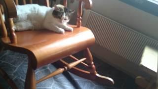 Tyyne kisse kiikkuu