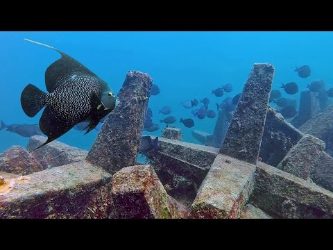 Dania Beach Erojacks | Scuba Diving the Dania Beach Erojacks