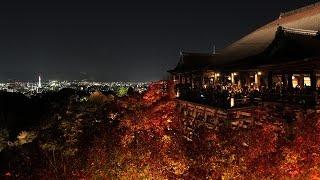 Go Abroad   Kyoto Sangyo University, Japan   Sebastian Bromelow   University of Kent