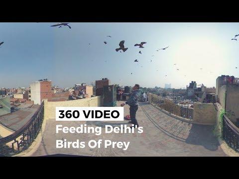 360° Video: Feeding Black Kites in Old Delhi
