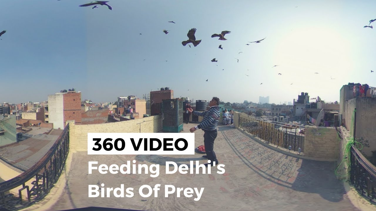 Check Out This Awesome Panoramic Kite >> 360 Video Feeding Black Kites In Old Delhi Youtube