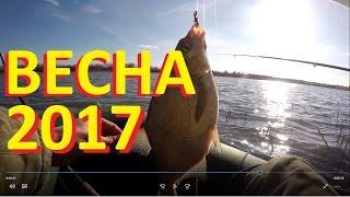 Весенняя рыбалка на донку - фидер 2017. Ловля ВОБЛЫ, карася, леща, густеры.