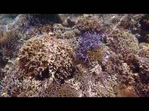Snorkelling Kawana Island Komodo National Park 2016