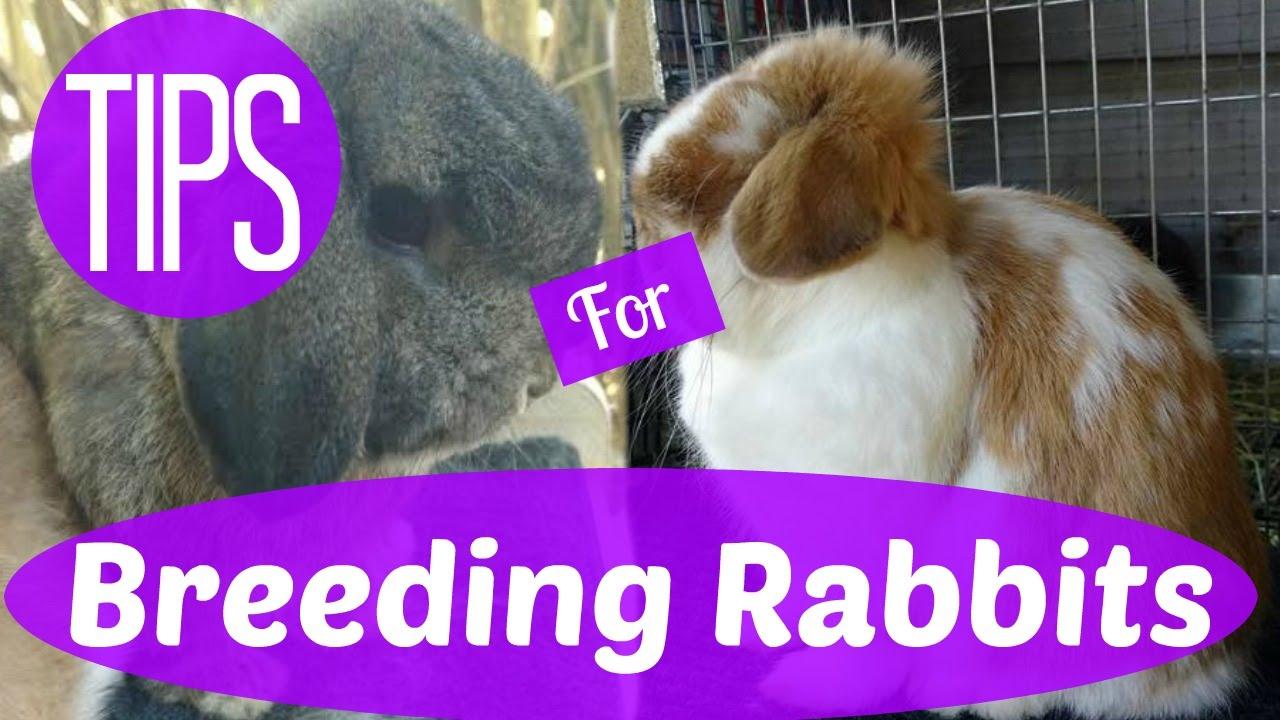Breeding Meat Rabbits – Age
