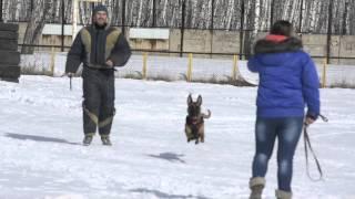 А ПРАВДА ЛИ?  Возможно ли из декоративной собачки сделать боевого пса?