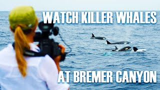Watch the killer whales of Bremer Canyon