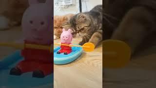 Funny Cat Video - Прикольный кот