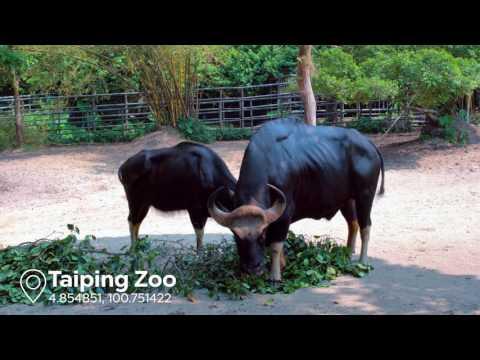 EXPERIENCE: Taiping