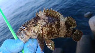 夜釣りの電気ウキとテトラで根魚の穴釣り♪