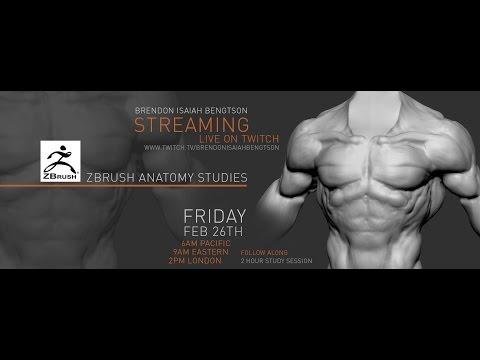 ZBrush Anatomy Studies - Teaching Stream