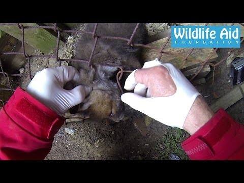 Gopro Wildlife Animal Rescue