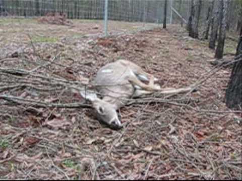 Deadly deer fence youtube for Fishing line deer fence