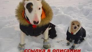 Обувь для собак купить в екатеринбурге