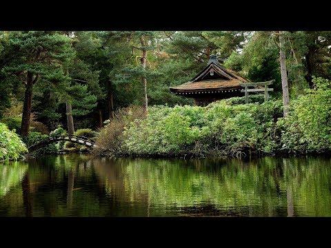 Pluie de Printemps, Chants d'Oiseaux & Douce Musique - Relaxation Meditation - Rain & Birdsongs -10H