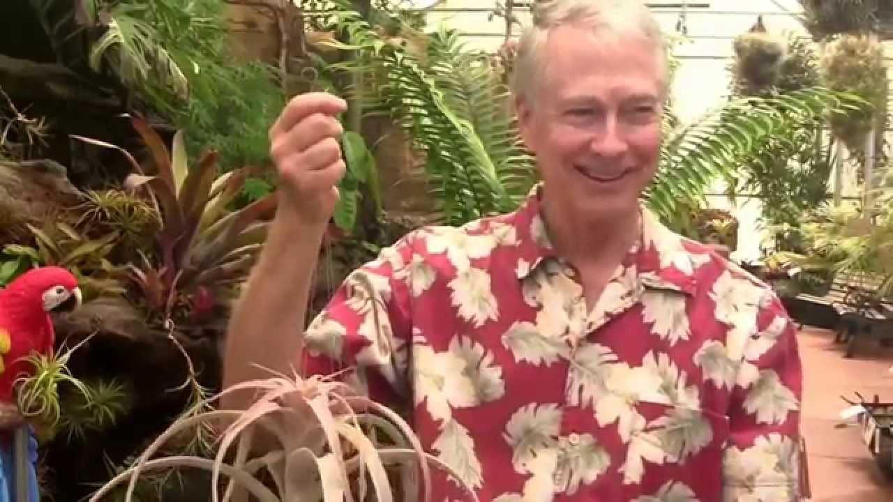 Paul Isley Rainforest Flora Tillandsia Hybrids 3 Youtube