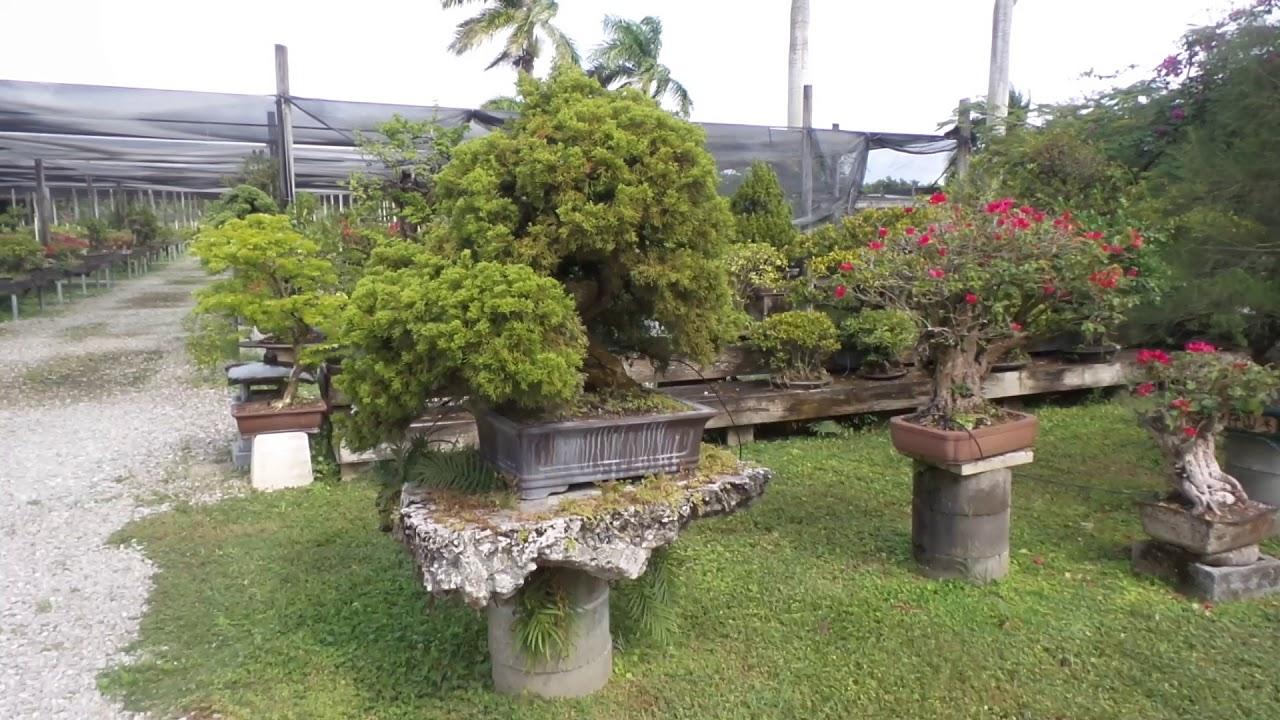 Miami Tropical Bonsai Garden Youtube