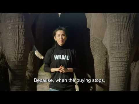 """War"" feat. WildAid Ambassador Li Bingbing"