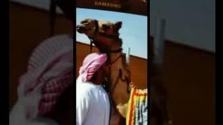 شله ( الربابه ) كلمات الشاعر راشد بن عمير الشامسي اداء علي الكيبالي