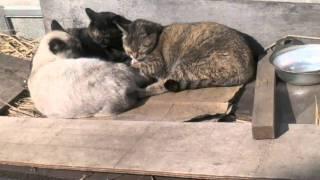 色んな野良猫ですが性別年齢不詳です。