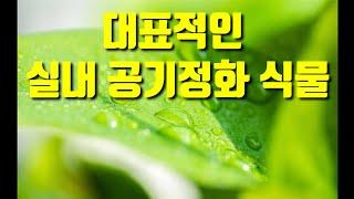 대표적인 실내공기정화 식물 / 미세먼지 제거 식물 / …