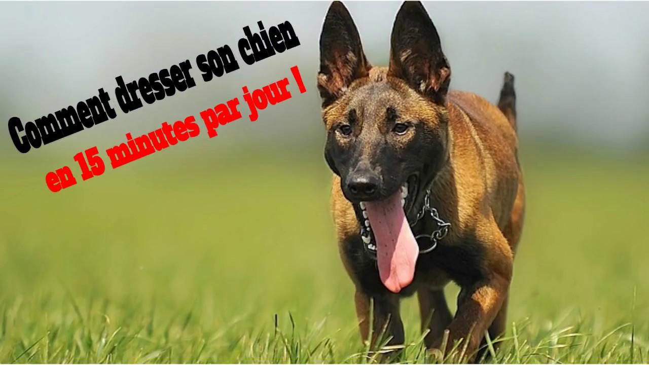 Comment dresser son chien en 15 minutes par jour (conseils