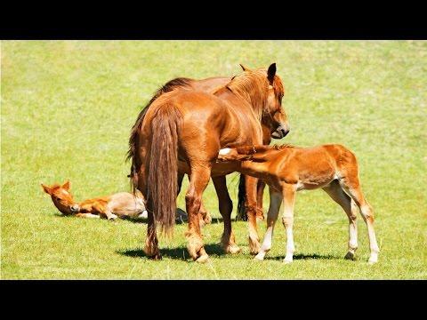Curso Reprodução de Cavalos - Cuidados com o Potro