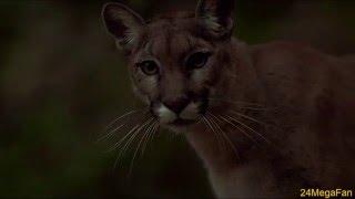 Kim and The Cougar Scene - 24 Season 2