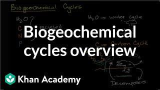 Biogeochemical Cycles Ecology Khan Academy