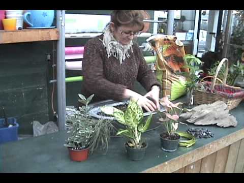 Le jardinage int rieur youtube for Jardinage interieur