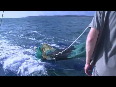 Sustainable Trawl Fishing In Queensland