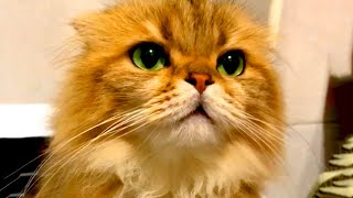 Cute Cats to Make You Laugh | Funny Pet Videos