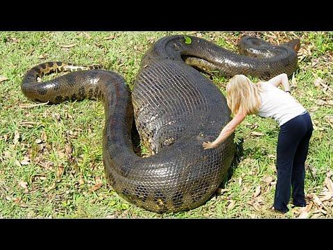 Вопрос: Как двигаются змеи, если у них нет ног?