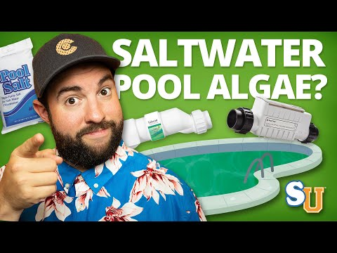 How To Remove ALGAE From A SALT WATER POOL | Swim University
